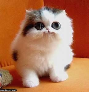 Cat   Pet Coupons