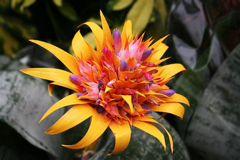 Exotic Flower Wallpapers  Wallpaper Cave