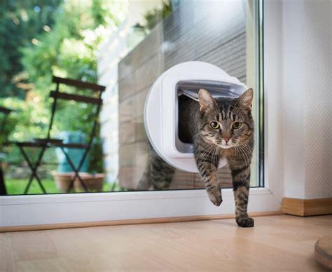 katzenklappe  fenster einbauen tipps und tricks