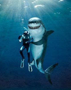 picture awesomeness shark great white shark animals