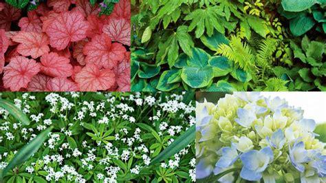 piante bellissime da giardino 7 bellissime piante crescono in ombra guida giardino