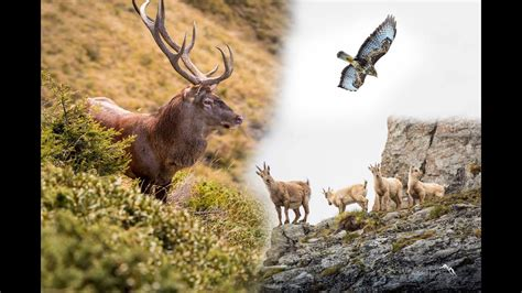 2015 Wildlife Switzerland YouTube