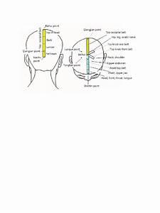 Zhu Scalp Diagram