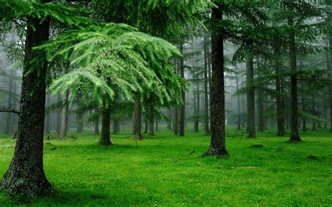 4k forest grass trees nature wallpapers resolution