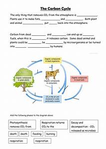 Carbon Cycle By Sian Jones - Teaching Resources
