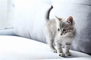 Verkleidung Für Katzen : gefahren f r katzen im haushalt katzenliebhaber ~ Frokenaadalensverden.com Haus und Dekorationen