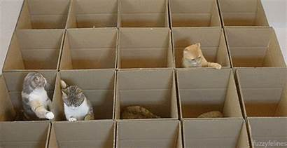 Cat Giphy Box Boxes Cats Even Mechanics