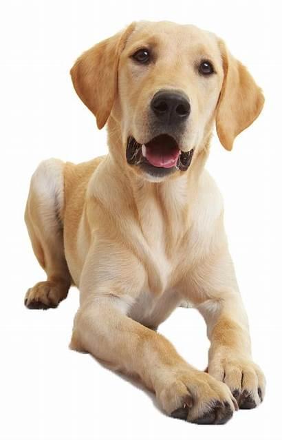 Training Lessons Classes Canine Behavior Dog Private