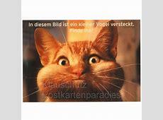 Ein kleiner Vogel Katzen Postkarte