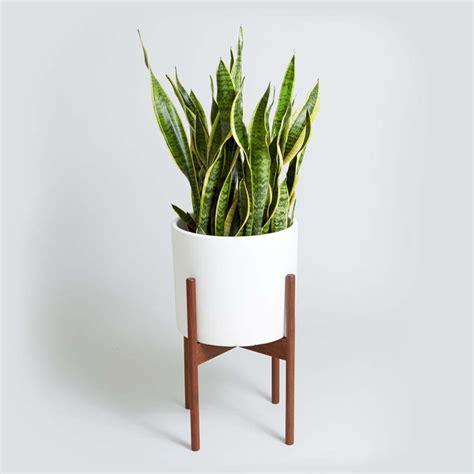 plante pour salle de bain d 233 coration salle de bain 224 l aide d utiles et belles plantes d int 233 rieur design feria