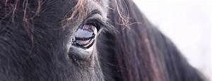 Kaltschaummatratzen Test Die Besten : pferdehaftpflichtversicherung test die besten aus 2018 ~ Bigdaddyawards.com Haus und Dekorationen