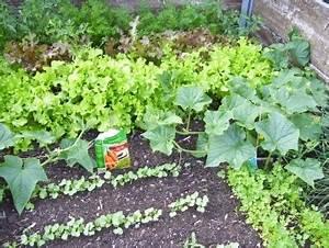 Endiviensalat Pflanzen Setzen : gem se im hochbeet anbauen wachstum anlegen s en ernten ~ Whattoseeinmadrid.com Haus und Dekorationen