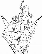 Coloring Pages Adult Flower Adults Floral Gladiolus Fairy Books Flowers Drawing Printable Colouring Sheets Drawings Thegraphicsfairy Graphics Graphicsfairy Sm Butterfly sketch template