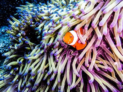 21 Stellar Photos of Australia's Great Barrier Reef Before it Disappears
