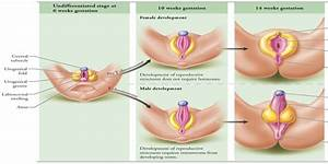 Pin Ambiguous Genitalia Pictures And Images on Pinterest