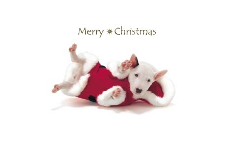merry christmas dogs animals background wallpapers desktop nexus image 1608195