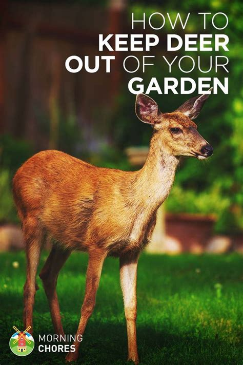 how to keep deer out of your garden 17 best images about deer repelent on gardens