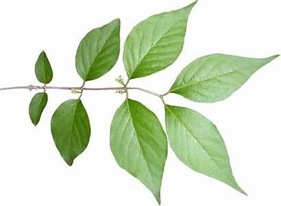 Stem Tree Plant Leaf Leaves Texture Textures
