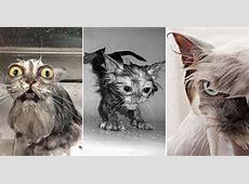 Nasse Katze lustige Bilder