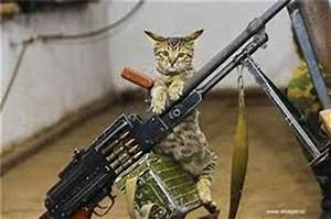 funny cats with guns - Mobile wallpapers