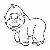 Gorilla Coloring Farbtonseiten Cartoon Gorille Della Coloritura Coloration Children Zoo Colouring Animal Niobrarachalk Animale Adulti Gli Adultes Illustrazione Immagini Fumetto sketch template