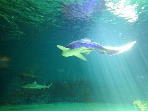 aquarium le 7eme continent a la lumi 232 re r 233