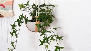 Suspension Plante Interieur : quelles plantes mettre dans une suspension ~ Preciouscoupons.com Idées de Décoration