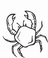 Crab Coloring Pages Printable Animalplace sketch template