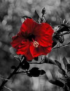 Schwarz Weiß Bilder Mit Farbeffekt Kaufen : schwarz weiss farbe 4 foto bild pflanzen pilze flechten bl ten kleinpflanzen ~ Bigdaddyawards.com Haus und Dekorationen