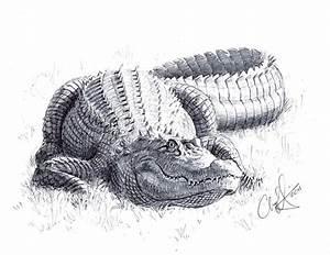 Alligator by Art-Minion-Andrew0 on DeviantArt