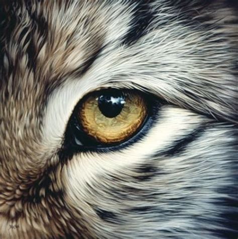 Animal Eye Art