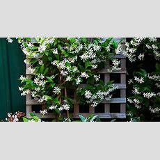 8 Fast Growing Climbing Plants  Australian House And Garden