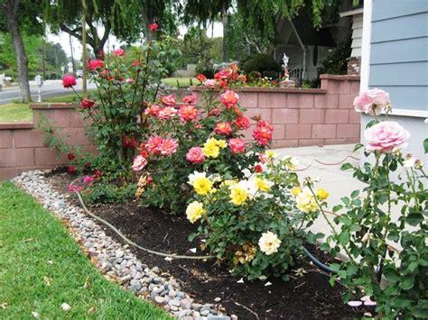 Best Rose Garden Images Pinterest Beautiful Roses