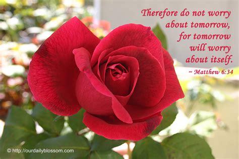 roses bible quotes quotesgram