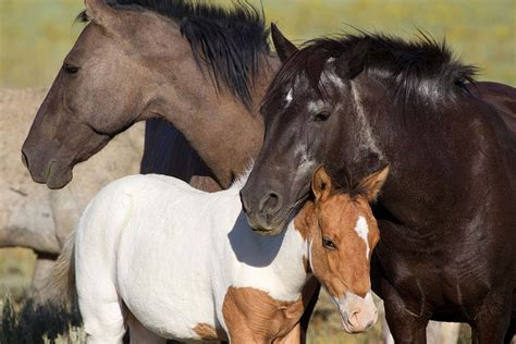 horses wild shot being alamy scientist