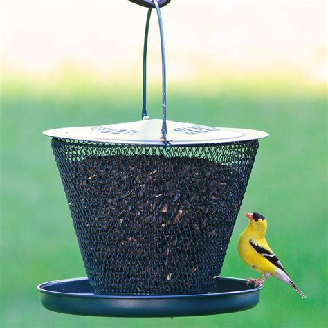 amazon com no no original with tray bird feeder forest