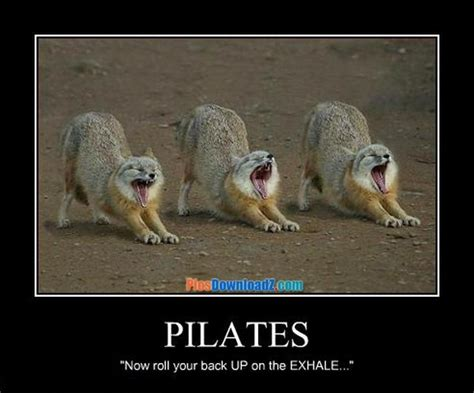 cat  pilates funny jokes pics