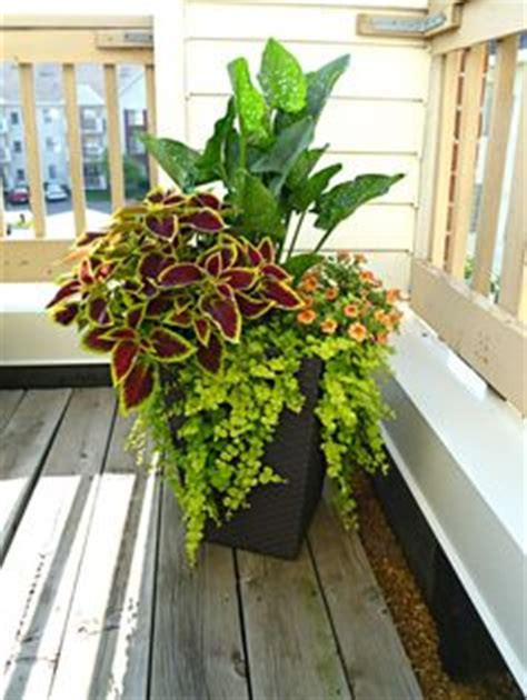 ideas   planters   neighborhood gardenpatio container flowers container