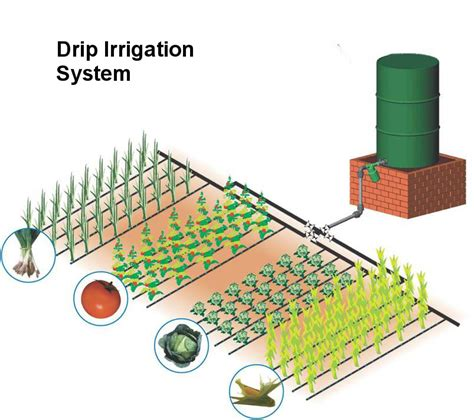 sprinkler system cost drip irrigation for increased vegetable production graduate farmer