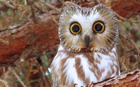 Background Owl Wallpaper by Owl Hd Wallpaper Background Image 1920x1200 Id