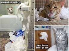 Cats and Toilet Paper are Mortal Enemies