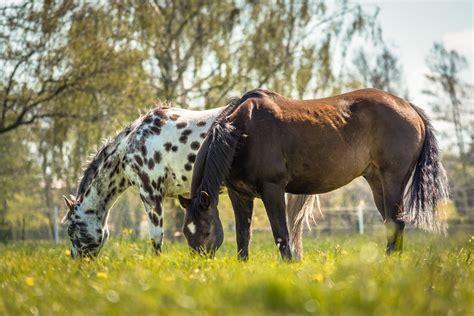 ursachen und behandlung von durchfall bei pferden