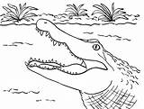Alligator Coloring Pages Printable Crocodile Alligators Head Gator Printables Sheet Sheets Template Print Display Collection Pata Sauti Cute Samanthasbell Whitesbelfast sketch template