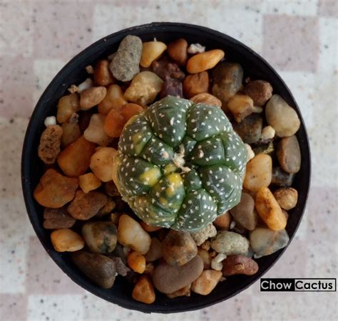 หินโรยหน้ากระถางแคคตัส ประโยชน์ของการโรยหิน และตัวอย่างหิน ...