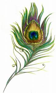 peacock feather   Peacock   Pinterest   Peacock feathers ...