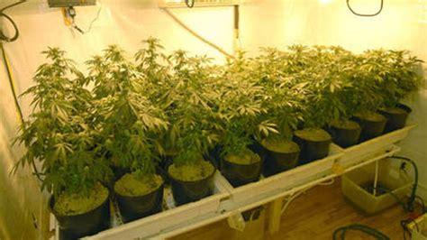 la culture du cannabis 224 domicile progresse beaucoup toujours du nouveau rien que pour vous