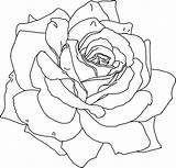 Coloring Printable Flower Flowers Rose Sheets Outline Colouring Roses Drawing Drawings Simple Line Adults Realistic Pattern Draw Adult Watercolor Patterns sketch template