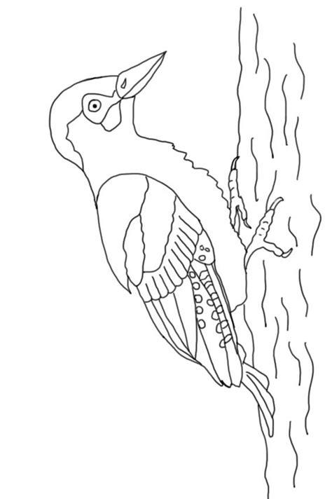 gruenspecht vogel des jahres  ausmalbild