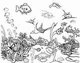 Fish Coloring Tank Aquarium Pages Tropical Drawing Fishtank Saltwater Fishing Printable Georgia Tanks Adult Drawings Netart Getdrawings Realistic Designlooter Getcolorings sketch template