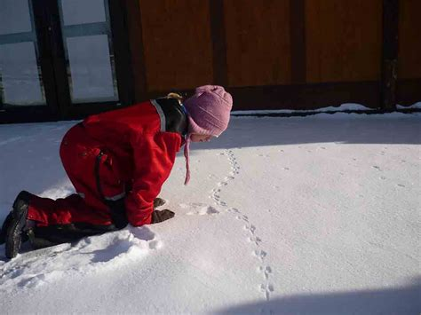 early dismissal program winter hike darien nature center